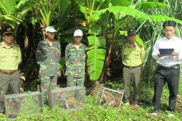 Drop wildlife on the natural environment in the national park of Phong Nha - Ke Bang